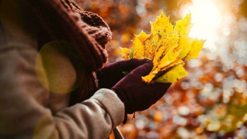 #autumnvibes