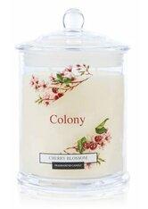 Wax Lyrical Colony Cherry Blossom Duftkerze 0.685 KG